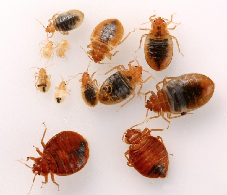 Bed bug specialist treatment service